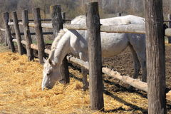 A horse behind a fence Stock Image