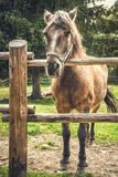 Horse behind a Fence Stock Images