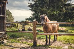 Horse behind a Fence stock image