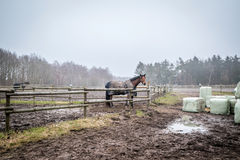 Horse behind a fence at a farm Stock Photography