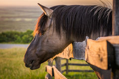 Horse behind the Fence Royalty Free Stock Photos