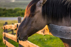 Horse behind the Fence Stock Photo