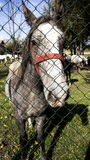 Horse behind fence Stock Images