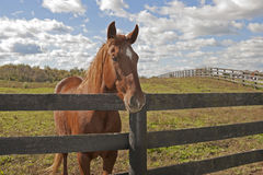 Horse behind a fence under a sky. Beautiful agricultural image of a horse on a farm behind a fence Stock Photo