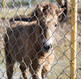 A horse behind a fence at the zoo Stock Photography