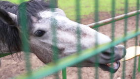 Horse behind a fence at the zoo Stock Image