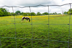 Horse behind the mesh fence Royalty Free Stock Images