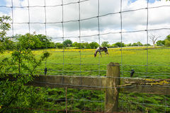 Horse behind the mesh fence stock photo