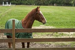 Horse behind wooden fence Royalty Free Stock Photography