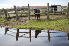 Horse behind a wooden fence with water reflexion Royalty Free Stock Photo