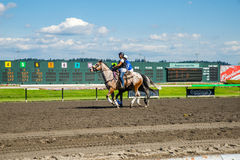 Horse being taken back to stable after race at Emerald Downs Stock Image
