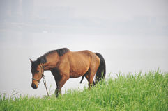 A horse besides the  xiangjiang river Stock Images