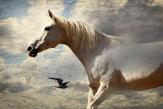 Horse and bird. Collage - a horse, a bird and sky Stock Photography