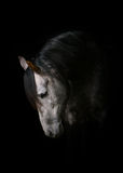 Horse on black Stock Image