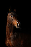 Horse on the black background. Brown horse on the black background Stock Photo