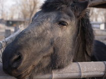 Horse. A black horse in farm Stock Images