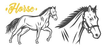 Horse. Black and white vector objects. vector illustration