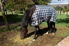 Horse, blanket. Horse eating with a blanket, country Royalty Free Stock Images