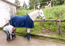 Horse in the blanket and boots. Stock Photography