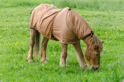 Horse with blanket. While grazing in a pasture Royalty Free Stock Images