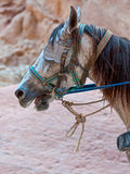 Horse with blinders. Close up of a horse with blinkers Stock Image