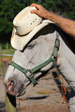 Horse blink vertical. Shot of a horse blink vertical royalty free stock photo
