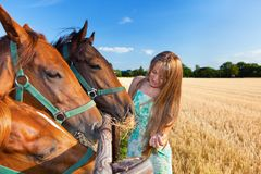 Horse and blond girl in paddock on summers Royalty Free Stock Image