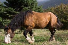 Horse with blue eyes stock image