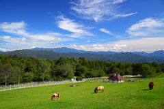 Horse and blue sky of plateau Stock Image