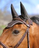 Horse Bonnet Royalty Free Stock Images