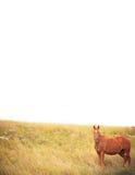 Horse border Royalty Free Stock Photos
