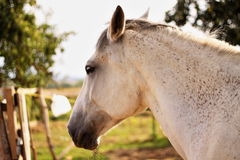 Horse. Is bored from doing nothing Stock Photography