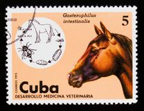 Horse Bot Fly Gasterophilus intestinalis, Horse Equus ferus caballus, Veterinary Medicine serie, circa 1975. MOSCOW, RUSSIA - SEPTEMBER 3, 2017: A stamp printed Stock Image