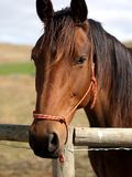 Horse Boy Royalty Free Stock Photo