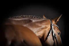 Horse braided mane stock photo
