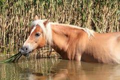Horse breeders equestrian sport Stock Photo