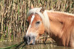 Horse breeders equestrian sport Stock Images