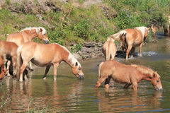 Horse breeders equestrian sport Stock Image