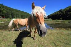 Horse breeders equestrian sport Stock Photos