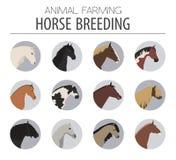 Horse breeding icon set. Farm animal. Flat design Royalty Free Stock Image