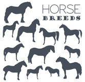 Horse breeding icon set. Farm animal. Flat design Royalty Free Stock Image