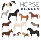 Horse breeding icon set. Farm animal. Flat design. Vector illustration stock illustration