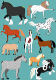 Horse breeds Stock Images