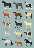 Horse breeds set Royalty Free Stock Photo