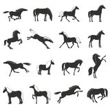 Horse Breeds silhouettes Black Icons Set Royalty Free Stock Photo