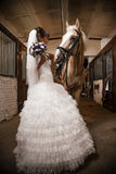 Horse and bride Stock Photo
