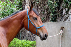Horse with a bridle Stock Photos