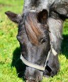 Horse, Bridle, Fauna, Halter