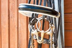 Horse bridle hanging on stable wooden door. Closeup outdoors. Stock Photography