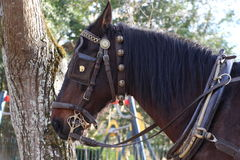 Horse in bridle. Horse head with bridle and reins Stock Photo